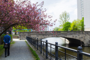 Bro och körsbärsträd Berlin